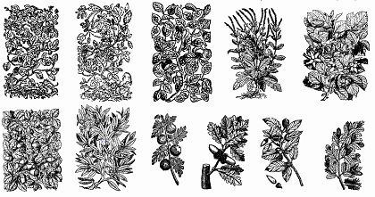 11 Old Plant Engravings Vector