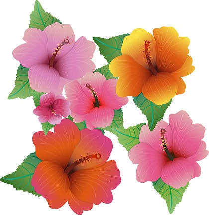 Free vector Illustration With Hibiscus Flowers Preview