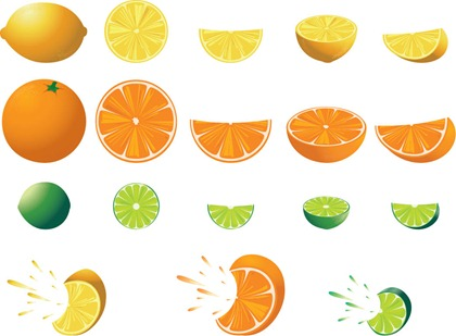 Free Citrus Fruit Vector