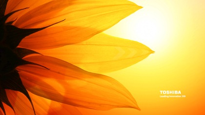 Toshiba_wallpaper_sunflower