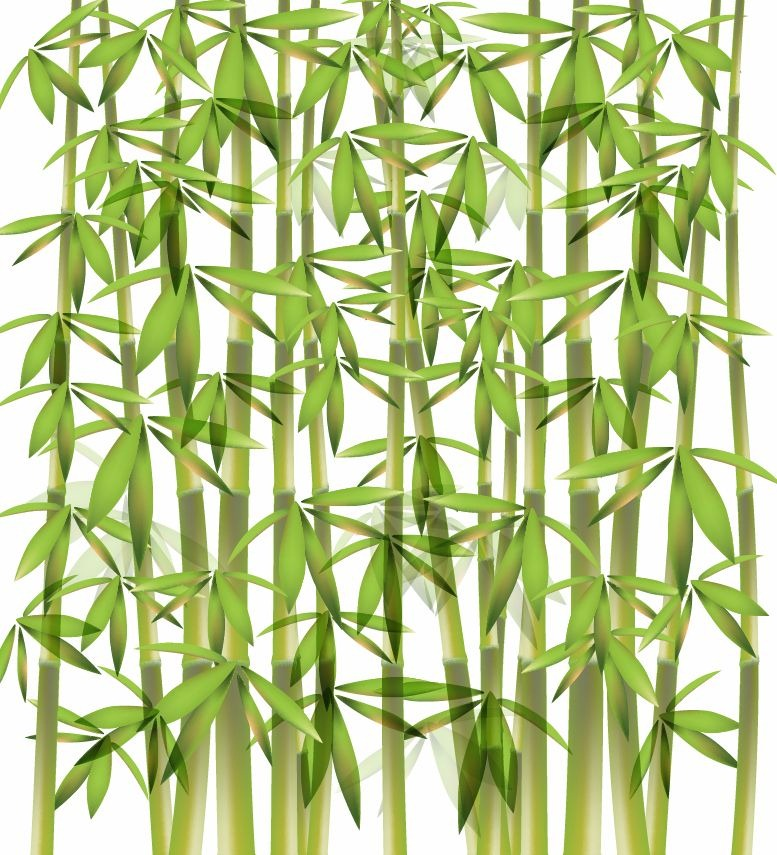 Bamboo Art Design : Bamboo vector illustration free graphics all