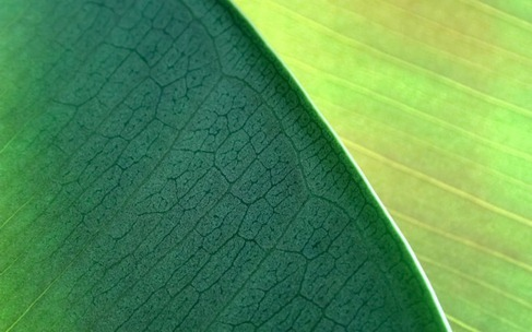 NaturePatterns04_preview