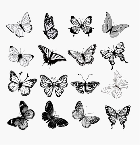 Set of Butterflies Silhouettes Vector Illustration