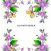 Multi-style lace flowers and butterfly Vector material