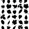 Leaf Silhouettes  &#8211; Free Vector Graphic