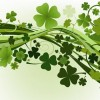 Green Clovers Vector Illustration