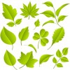 Green Leaves Vector Graphic Set