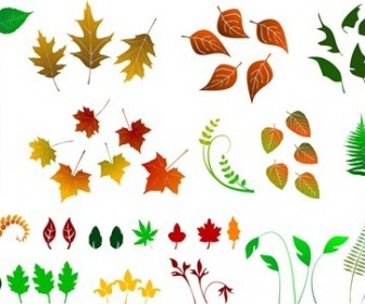 Huge Collection of Vector Leaves