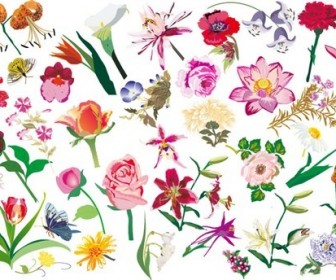 Various Flowers Vector Image Set