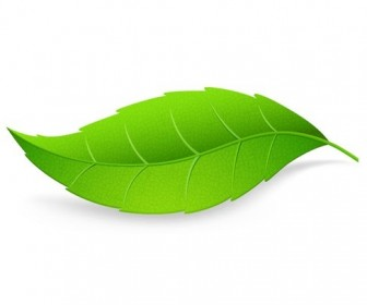 Green Leaf Isolated on White Background Vector Illustration